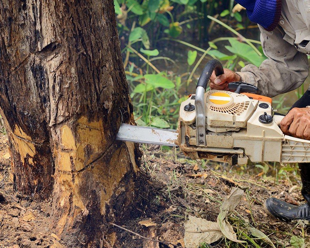 Tree Service Jupiter - Tree Removal