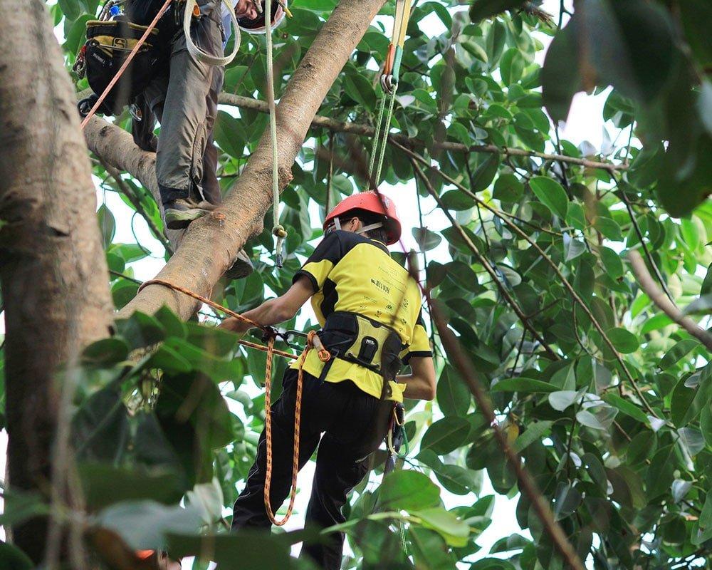 Tree Service Jupiter - Emergency Tree Removal