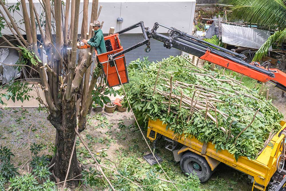 Tree Service Jupiter - Tree Pruning