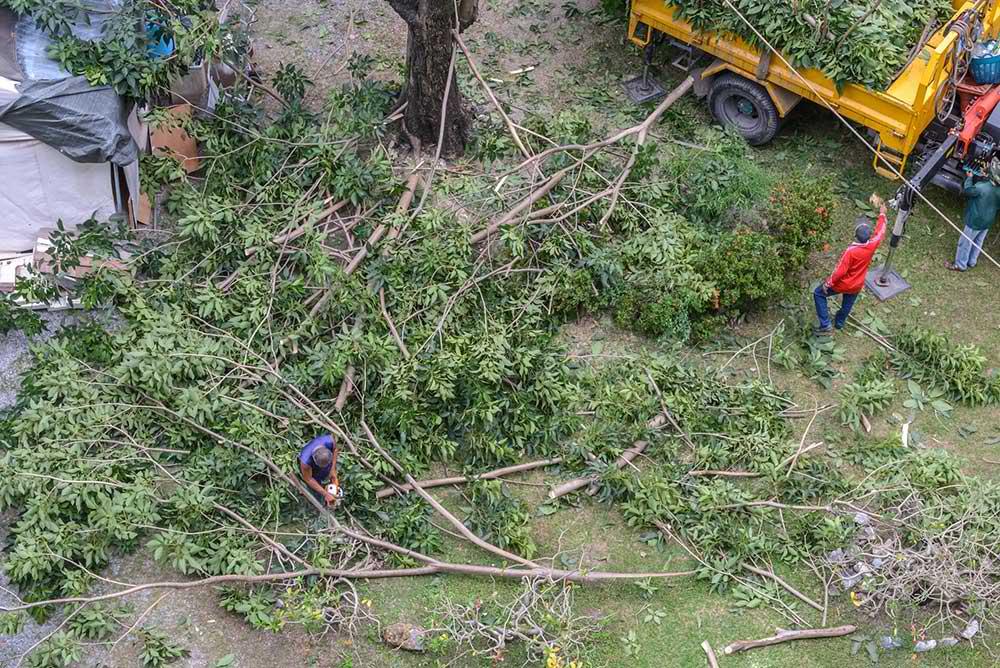Tree Service Jupiter - Tree Trimming
